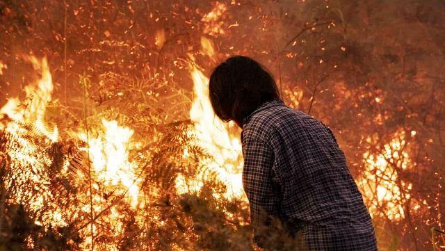 https: img.okeinfo.net content 2019 03 09 340 2027816 kebakaran-hutan-dan-lahan-di-bengkalis-terus-meluas-haMYHV64gn.jpeg