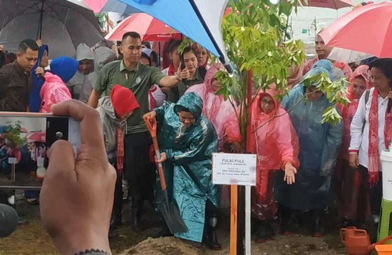 https: img.okeinfo.net content 2019 03 11 337 2028377 hujan-hujanan-iriana-jokowi-tanam-pohon-mangrove-di-tanjung-lesung-yAlhJR03vu.jpg