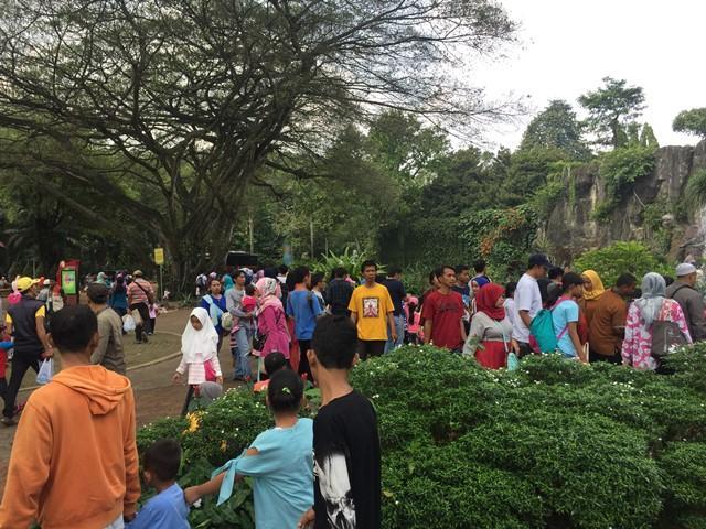 https: img.okeinfo.net content 2019 04 04 338 2038949 5-pengunjung-taman-margasatwa-ragunan-tertimpa-pohon-1-meninggal-dunia-RT2J2i3fuL.jpg