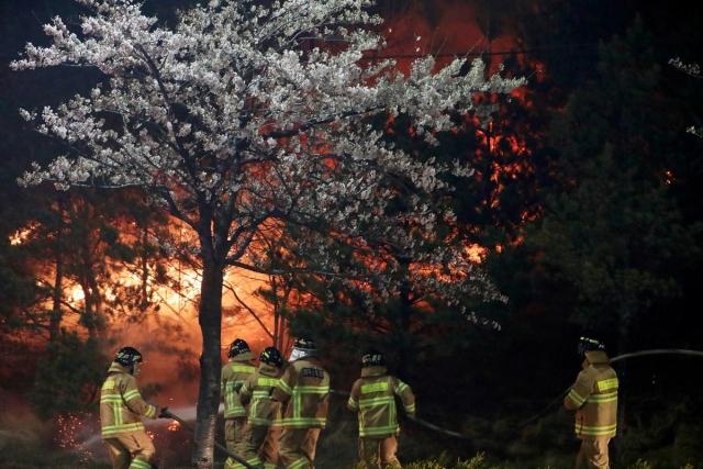 https: img.okeinfo.net content 2019 04 05 18 2039488 4-000-ribu-orang-mengungsi-imbas-kebakaran-hutan-landa-korea-selatan-fMJeZIRBmQ.jpg