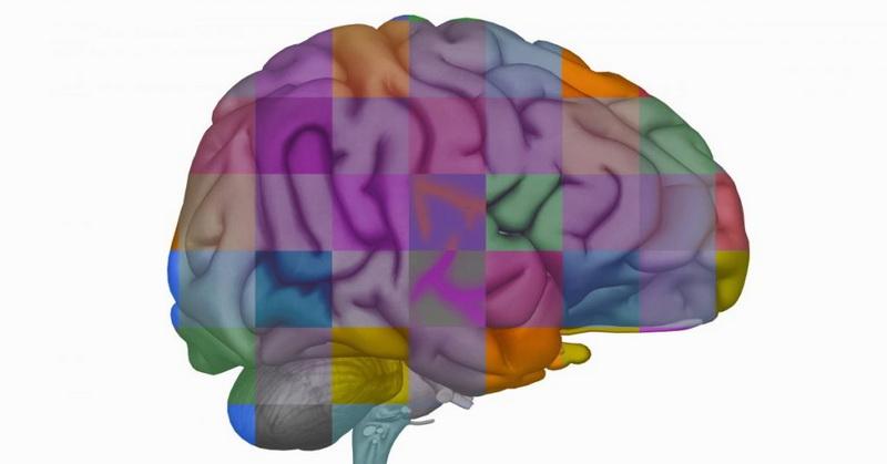 https: img.okeinfo.net content 2019 04 13 56 2043083 ilmuwan-memasukkan-gen-otak-manusia-ke-kera-wfPnzA7fhC.jpg