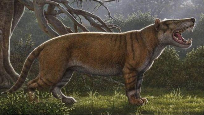 https: img.okeinfo.net content 2019 04 22 18 2046239 fosil-singa-raksasa-ditemukan-di-laci-museum-kenya-hPVR0SuXt0.jpg