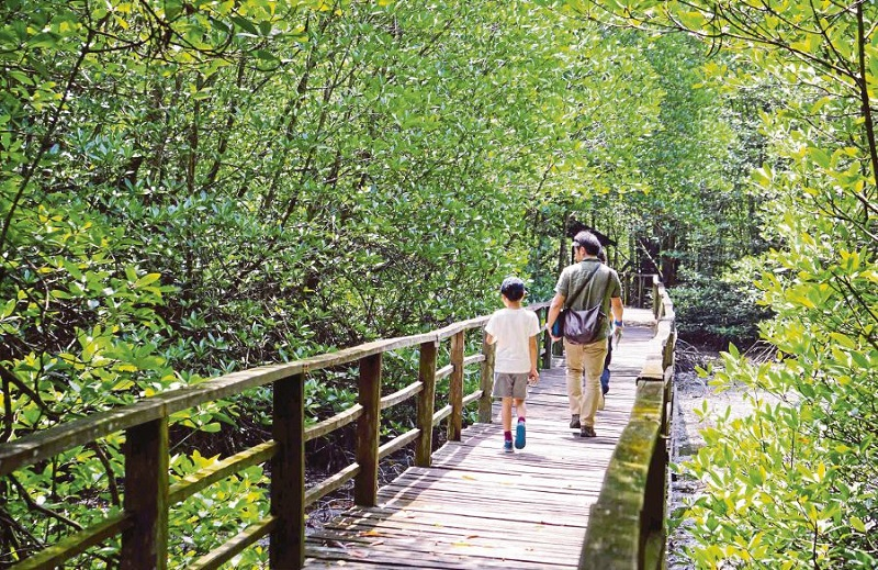 https: img.okeinfo.net content 2019 05 02 406 2050823 restorasi-hutan-mangrove-untuk-kembangkan-potensi-wisata-alam-ktazTcKaFi.jpg