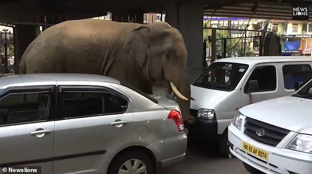 https: img.okeinfo.net content 2019 05 03 18 2050995 gajah-liar-masuk-kota-bikin-panik-warga-india-nznhqlxjph.jpg