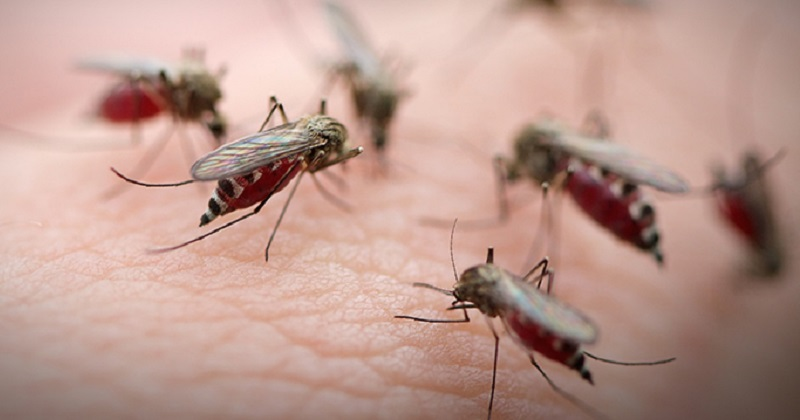 https: img.okeinfo.net content 2019 05 03 481 2050859 jutaan-nyamuk-dilepas-untuk-tangkal-demam-berdarah-wc7J9klmAj.jpg