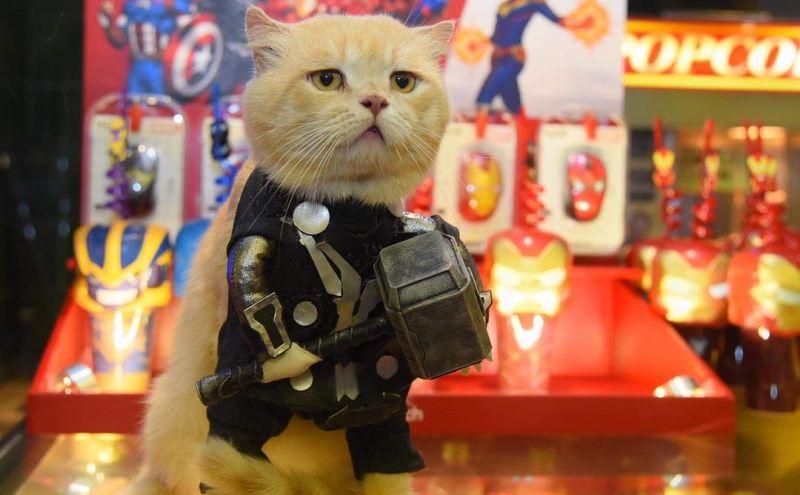 https: img.okeinfo.net content 2019 05 06 612 2051957 lucunya-catvangers-kucing-yang-cosplay-jadi-karakter-avenger-endgame-Wnu32JhJvu.jpg