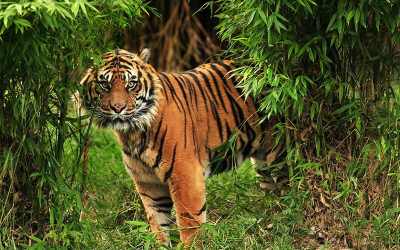 https: img.okeinfo.net content 2019 05 08 340 2053072 identifikasi-3-harimau-sumatera-baru-taman-nasional-berbak-sembilang-pasang-camera-trap-MvuTK2vWvx.jpg