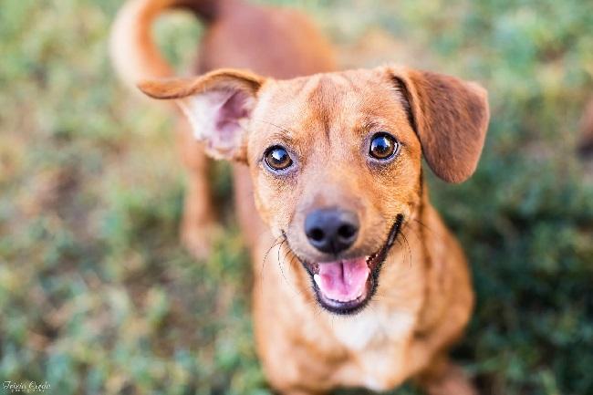 https: img.okeinfo.net content 2019 05 23 56 2059618 ketika-anjing-tersenyum-ini-penjelasan-ilmiahnya-L2HX41nOP4.jpg