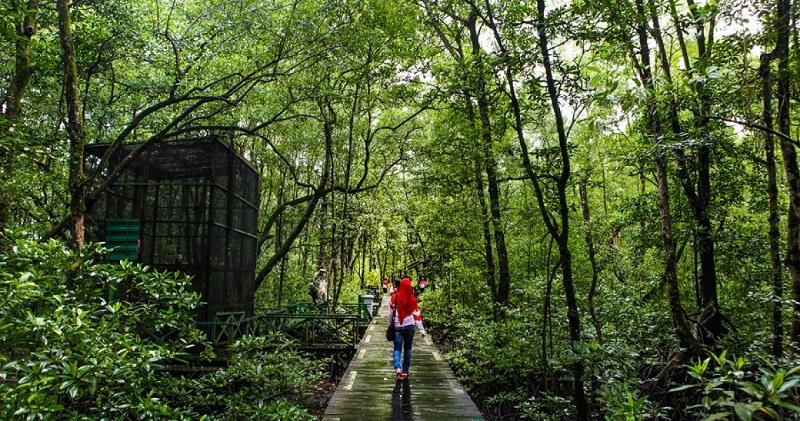 https: img.okeinfo.net content 2019 05 24 406 2060142 pelestarian-hutan-mangrove-untuk-lingkungan-dan-tingkatkan-potensi-wisata-alam-cfSsYkvVEa.jpg