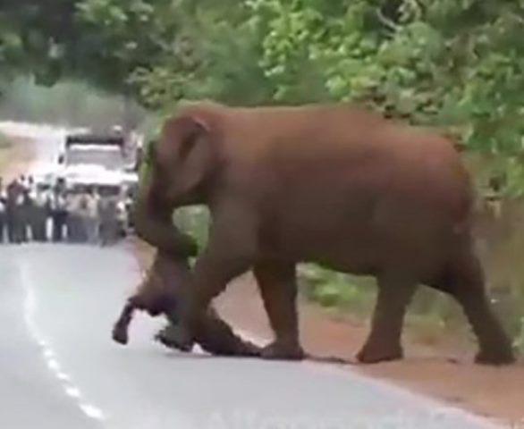 https: img.okeinfo.net content 2019 06 11 18 2065406 kawanan-gajah-gelar-prosesi-pemakaman-anak-yTZCDdCXzA.jpg