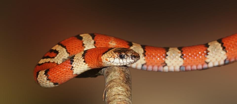 https: img.okeinfo.net content 2019 06 15 614 2066726 jangan-bunuh-ular-di-rumah-sembarangan-ini-hukumnya-8z45YawViF.jpg