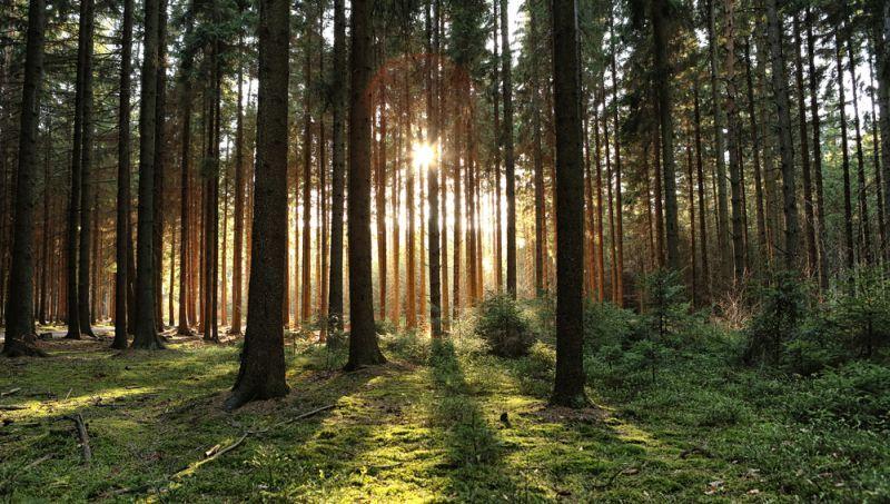 https: img.okeinfo.net content 2019 06 16 406 2067072 ingin-menikmati-hutan-di-jakarta-bisa-kok-FbKeuVjrth.jpg