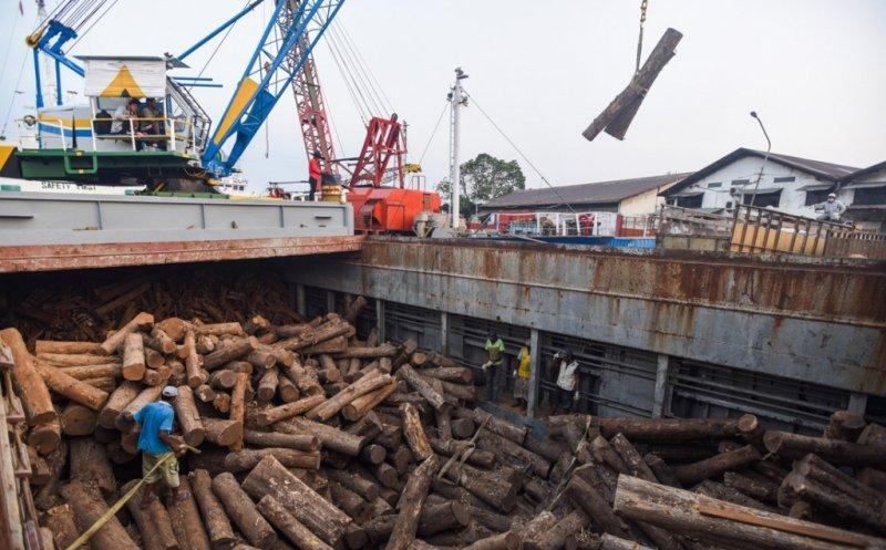 https: img.okeinfo.net content 2019 06 18 320 2067881 pasok-kebutuhan-industri-kayu-140-kelompok-petani-hutan-difasilitasi-ZeBvM3pMnv.jpg