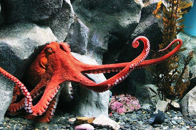 https: img.okeinfo.net content 2019 06 19 406 2068353 mengenal-3-spesies-baru-hewan-laut-dalam-di-jakarta-KqsbupuYfb.jpg