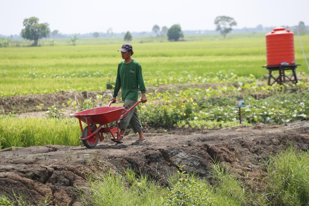 https: img.okeinfo.net content 2019 06 24 320 2070174 dpd-kementan-berhasil-mendorong-ekspor-pertanian-W21pLKbRma.jpg