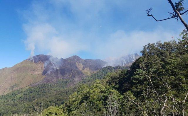 https: img.okeinfo.net content 2019 06 24 340 2070371 141-6-hektare-kawasan-hutan-gunung-rinjani-terbakar-hkDLekEhuO.jpg