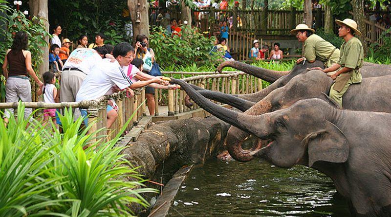 https: img.okeinfo.net content 2019 07 04 406 2074694 ditargetkan-jadi-tempat-wisata-80-kebun-binatang-wajib-sertifikasi-tahun-depan-YMK3iw72Zi.jpg