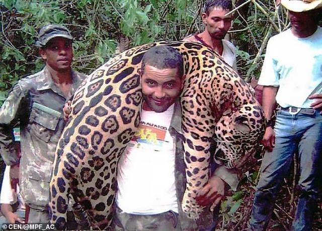 https: img.okeinfo.net content 2019 07 10 18 2077245 dokter-gigi-yang-telah-membunuh-1-000-jaguar-akhirnya-tertangkap-6TZwtxC6If.jpg
