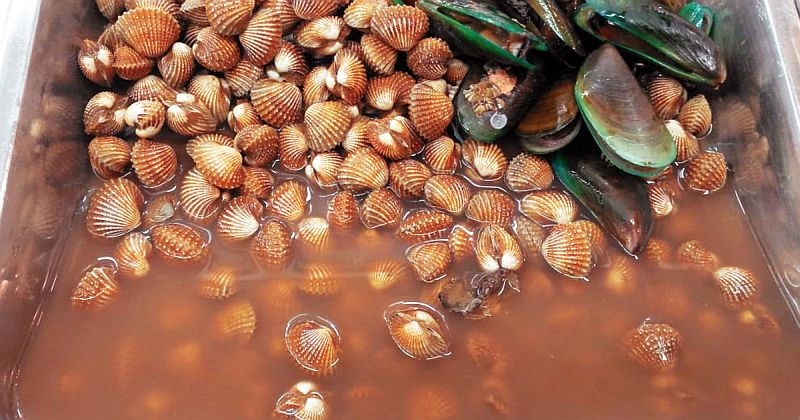 https: img.okeinfo.net content 2019 07 10 65 2077098 terobosan-temuan-ipb-bersihkan-kerang-dari-pencemaran-mikroplastik-di-laut-iUwjikFx0H.jpg