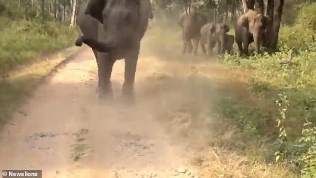 https: img.okeinfo.net content 2019 07 11 18 2077643 kesal-suara-klakson-kawanan-gajah-kejar-rombongan-turis-Nm2s6YOOFm.jpg
