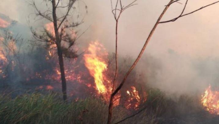 https: img.okeinfo.net content 2019 08 02 519 2086891 kebakaran-hutan-gunung-welirang-padam-petugas-masih-bersiaga-di-lokasi-dLA7fb70QI.JPG