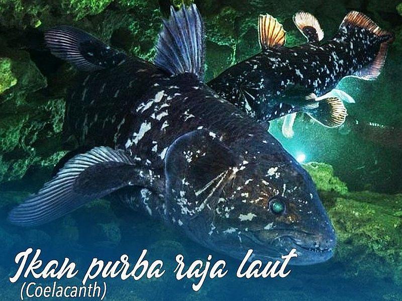 https: img.okeinfo.net content 2019 08 03 320 2087250 nelayan-temukan-ikan-purba-coelacanth-begini-penampakannya-Y8aVqtrxZT.jpg