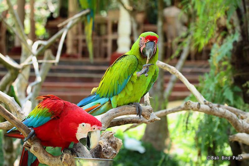 66 Gambar Binatang Burung Peliharaan Gratis Terbaru