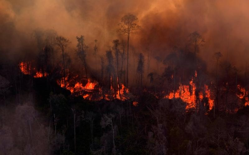 https: img.okeinfo.net content 2019 08 09 340 2089880 kebakaran-hutan-lahan-di-jambi-mencapai-357-hektare-sWnOIMrJj3.jpg