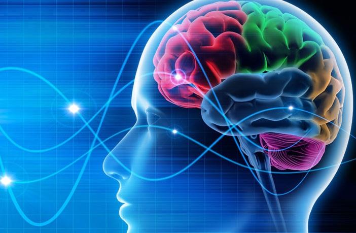 https: img.okeinfo.net content 2019 08 10 56 2090286 3-fakta-ilmiah-otak-manusia-WK0p0uYNS7.jpg