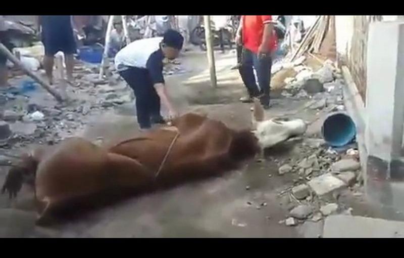 https: img.okeinfo.net content 2019 08 12 525 2090934 viral-pria-meninggal-jelang-sembelih-hewan-kurban-4wH1Hu6GEO.jpg