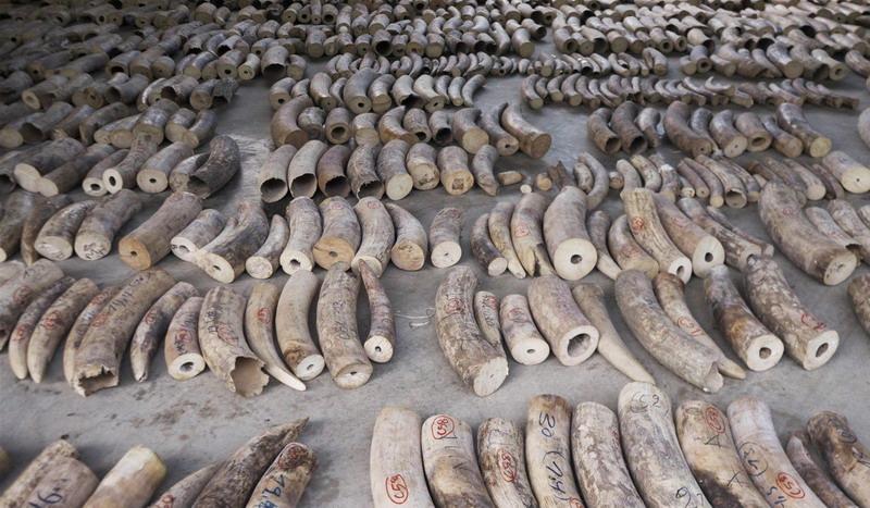 https: img.okeinfo.net content 2019 08 13 18 2091513 peringati-hari-gajah-sedunia-singapura-larang-total-perdagangan-gading-mulai-2021-wyRtBvUUbT.jpg