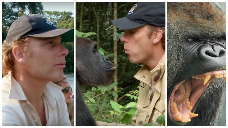 https: img.okeinfo.net content 2019 08 13 196 2091323 kisah-haru-persahabatan-damian-dan-kwibi-si-gorila-7cYhbXomcr.jpg