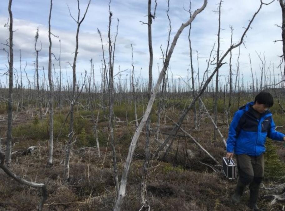 https: img.okeinfo.net content 2019 08 18 56 2093574 nasa-teliti-dampak-kebakaran-hutan-arktik-di-alaska-nEwMI1o6y0.jpeg