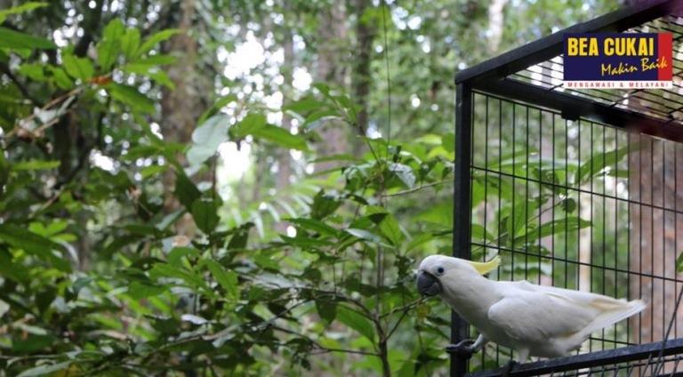 https: img.okeinfo.net content 2019 08 20 1 2094280 bea-cukai-sorong-hadiri-pelepasliaran-burung-endemik-hasil-sitaan-DPX0QmhA0I.jpg