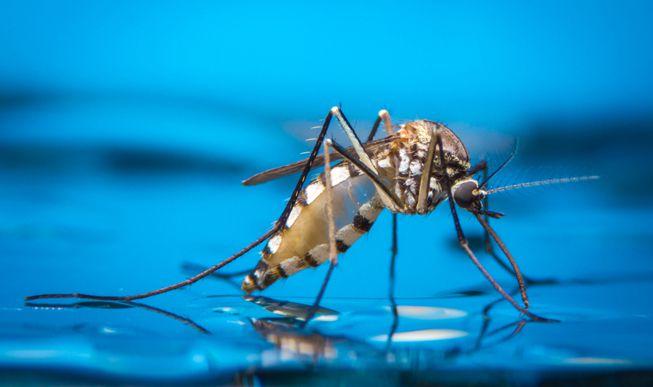 https: img.okeinfo.net content 2019 08 22 481 2095188 hari-nyamuk-sedunia-kenali-jenis-nyamuk-dan-penyakit-yang-dibawanya-ngXC2ptk8q.jpg