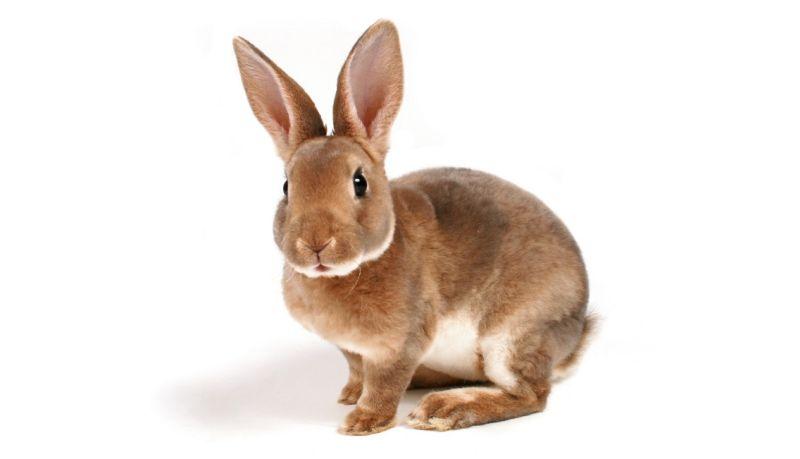https: img.okeinfo.net content 2019 08 22 612 2095111 rakyat-twitter-penasaran-ini-kelinci-atau-gagak-9fKviWZbK8.jpg