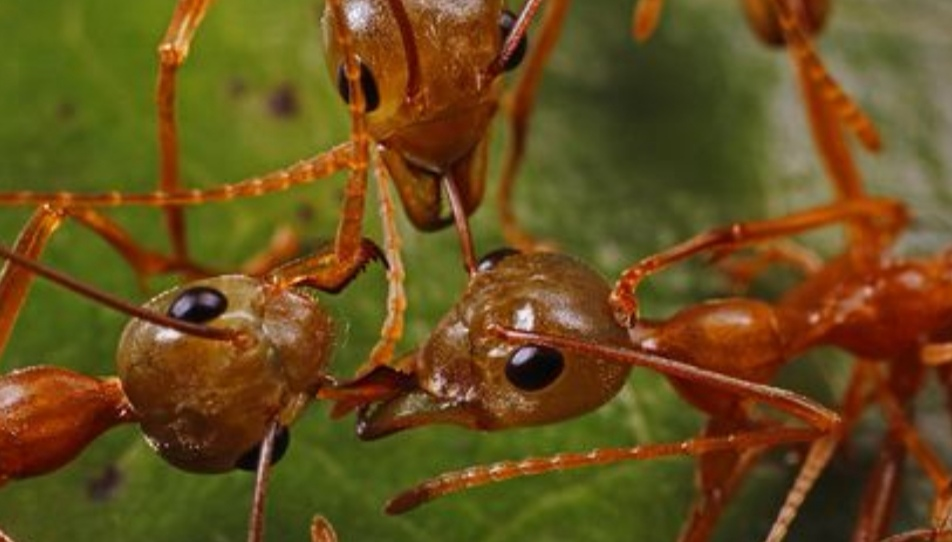 https: img.okeinfo.net content 2019 09 01 56 2099208 ternyata-ini-fungsi-antena-pada-semut-Kj2ovmxZbg.jpg