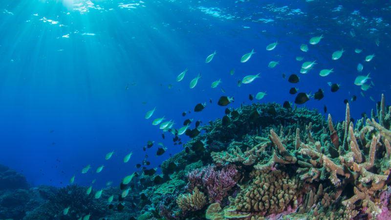 https: img.okeinfo.net content 2019 09 02 56 2099687 peningkatan-suhu-laut-ancam-organisme-dan-terumbu-karang-a27HUWmOCn.jpg