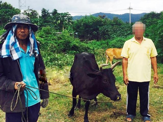 https: img.okeinfo.net content 2019 09 06 18 2101644 pria-68-tahun-tepergok-perkosa-sapi-ditanya-alasannya-pelaku-hanya-tersenyum-GiCHNfWixs.jpg