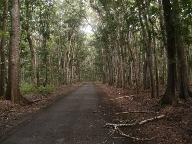 Misteri Alas Purwo, Dikaitkan dengan KKN Desa Penari hingga ... Images may be subject to copyright. Find out more Related images