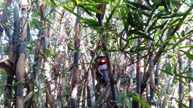 https: img.okeinfo.net content 2019 09 11 337 2103218 viral-ojol-dapet-order-mistis-motornya-nyangkut-di-pohon-bambu-pcCw9IoqBn.jpg