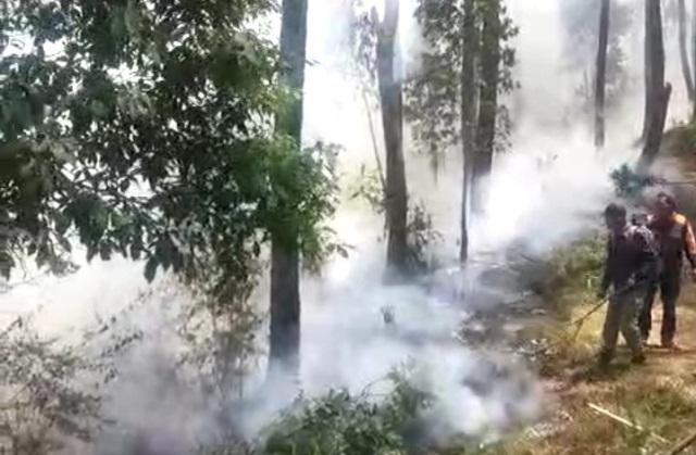 https: img.okeinfo.net content 2019 09 17 512 2105987 hutan-kawasan-wisata-gedong-songo-terbakar-LwF3Ufcyhs.JPG