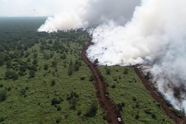 https: img.okeinfo.net content 2019 09 19 610 2106644 281-titik-api-terpantau-di-sumsel-status-udara-sempat-berbahaya-DfhBrMdD2y.jpg