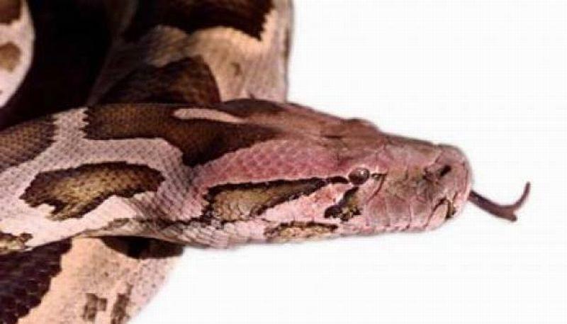 https: img.okeinfo.net content 2019 09 19 612 2107002 hati-hati-jika-ular-masuk-rumah-bisa-jadi-itu-jin-k1vaV0H4Hy.jpg