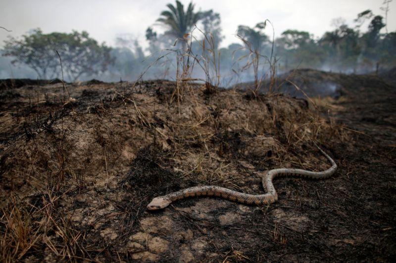 https: img.okeinfo.net content 2019 09 19 612 2107023 tak-hanya-tangkalaluk-kalimantan-juga-punya-ular-gaib-nabau-sepanjang-80-meter-NKAbxmuj3S.jpg