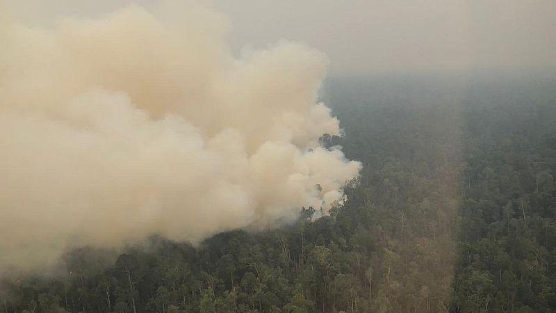 https: img.okeinfo.net content 2019 09 22 337 2107933 polisi-tangkap-petani-pembakaran-hutan-di-kalsel-D6Qk4NCvMN.jpg