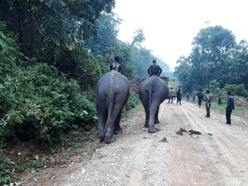 https: img.okeinfo.net content 2019 10 03 340 2112549 gajah-liar-di-jambi-lukai-warga-proses-evakuasi-berlangsung-menegangkan-EwuabM1RQF.jpg