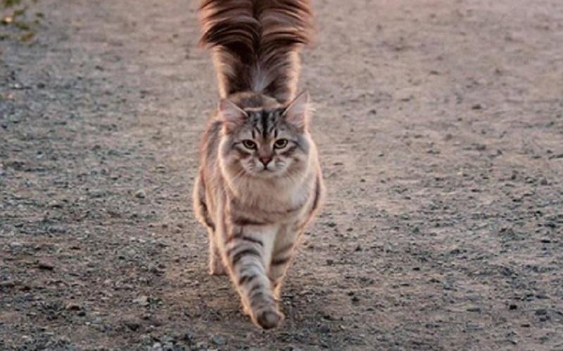 https: img.okeinfo.net content 2019 10 10 614 2115114 viral-video-kucing-ganggu-salat-netizen-akibat-tak-rapatkan-saf-2J6zWFsb1n.jpg