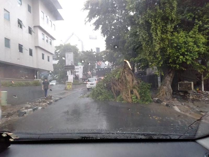 https: img.okeinfo.net content 2019 11 02 338 2124969 diguyur-hujan-pohon-tumbang-di-kawasan-kemang-Y9Vu6e3wJ3.jpg