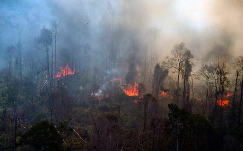 https: img.okeinfo.net content 2019 11 08 320 2127253 program-prioritas-klhk-dari-cegah-kebakaran-hutan-hingga-energi-terbarukan-OdSlhPFbCn.jpg